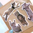 cat_tag17